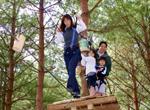 tree_trekking